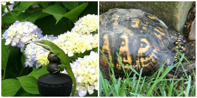 anole-turtle