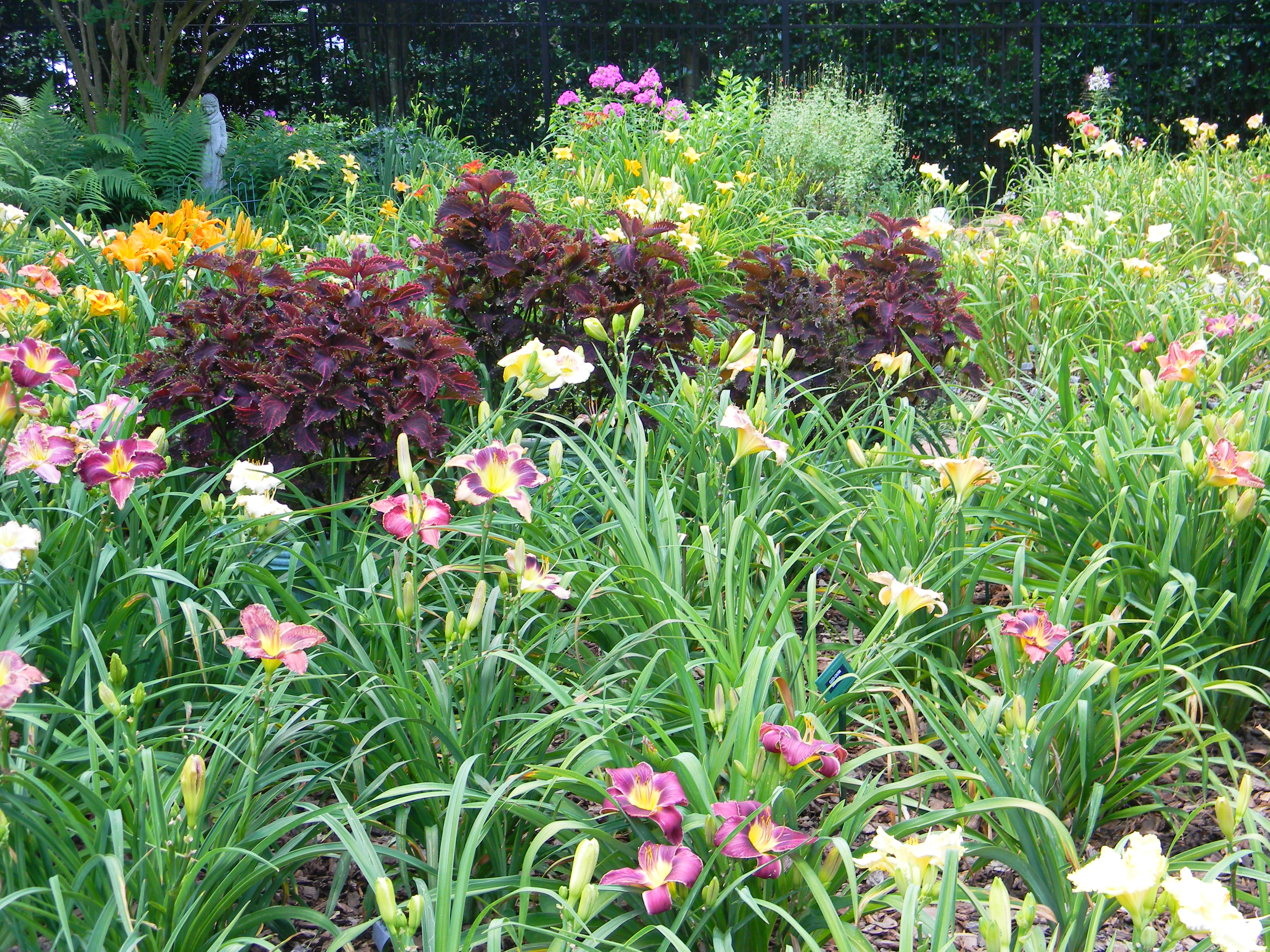 The Billinda Daylily Garden Is An Official American Hemerocallis Society  Display Garden. Bill And Linda Are Members And Past Presidents Of The  Piedmont ...